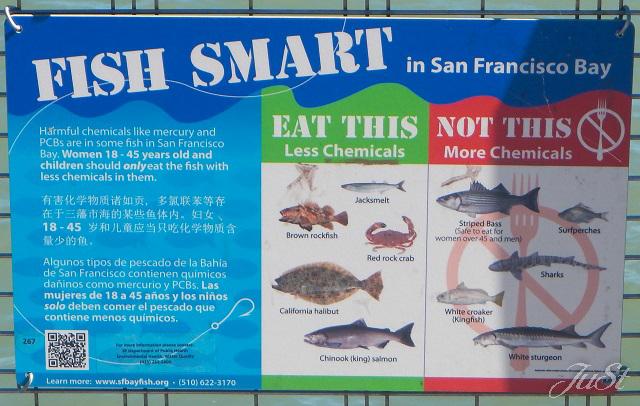 Bild Fische in der San Francisco Bay