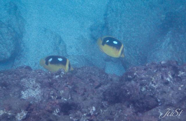 Bild Schnorcheln Na Pali Küste 2