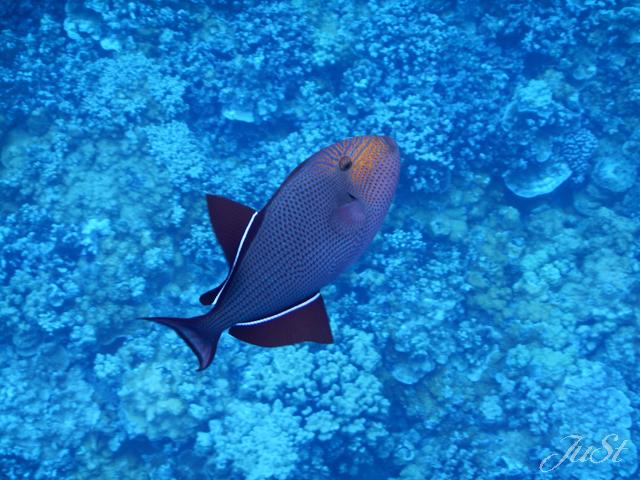 Bild Fische Molokini 5