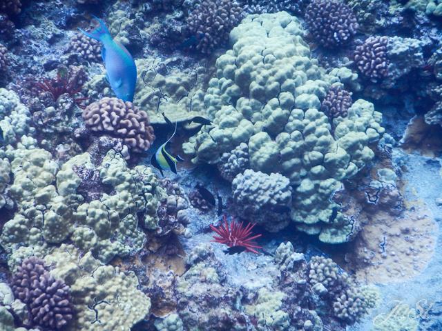 Bild Fische Molokini 6