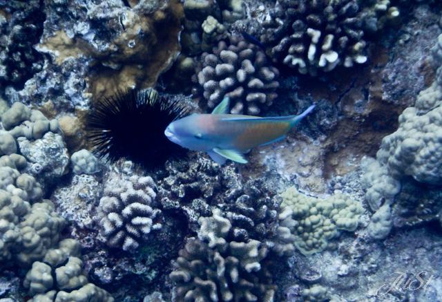 Bild Fische Molokini 2