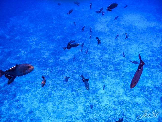 Bild Fische Molokini 1