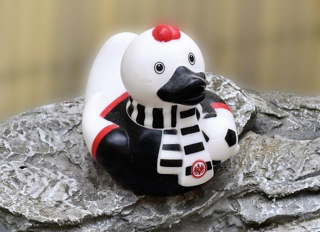 Bild Ente mit Schal