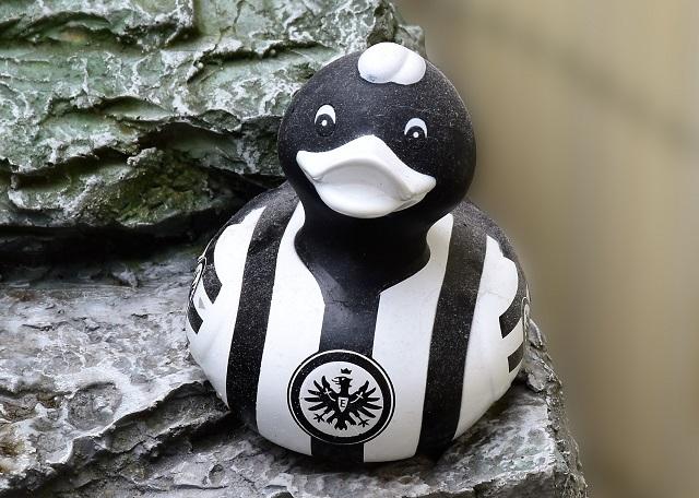 Bild Weiss Schwarze Ente