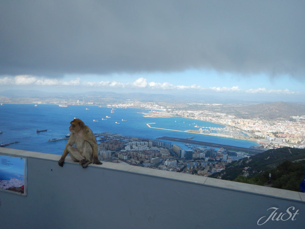 Bild Gibraltar Affenfelsen