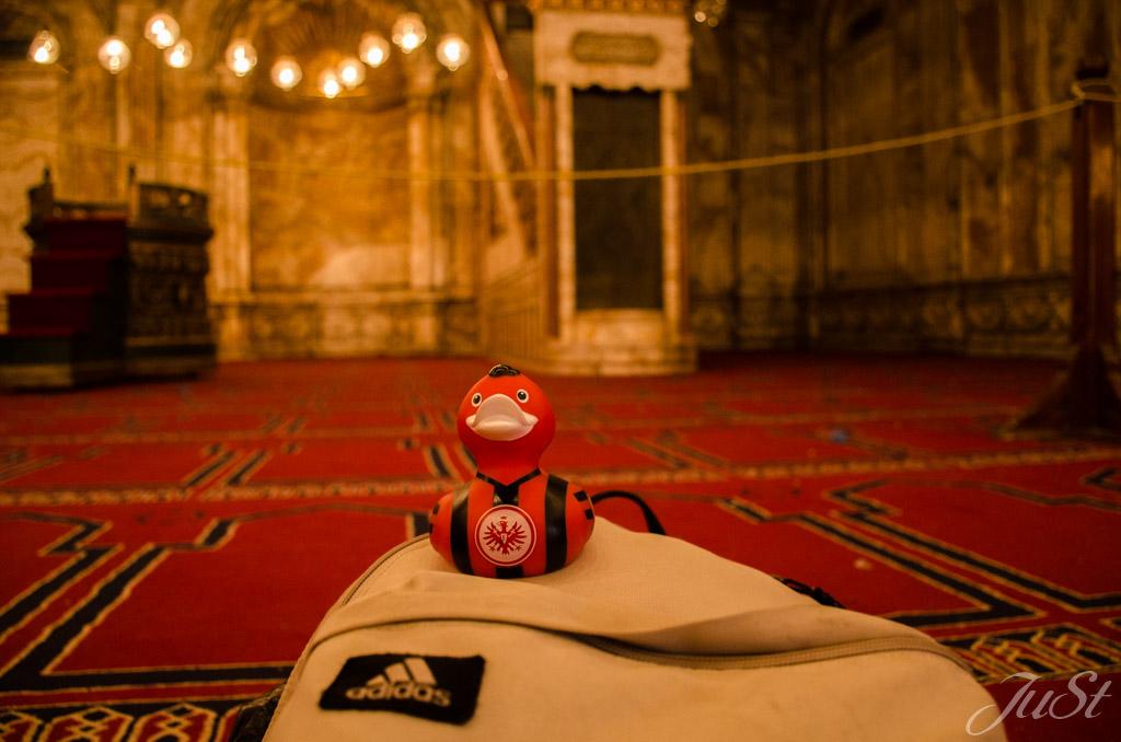 Ente in der Moschee
