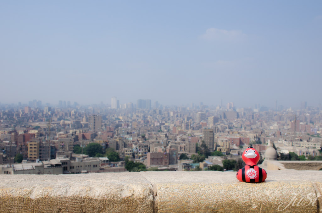 Ente mit Blick auf Kairo