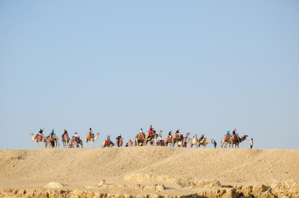Viele Kamele an der Große Sphinx von Gizeh