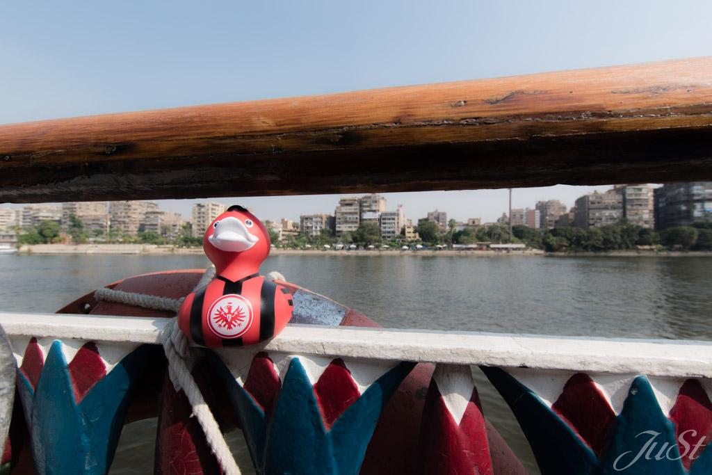 Ente auf dem Nil