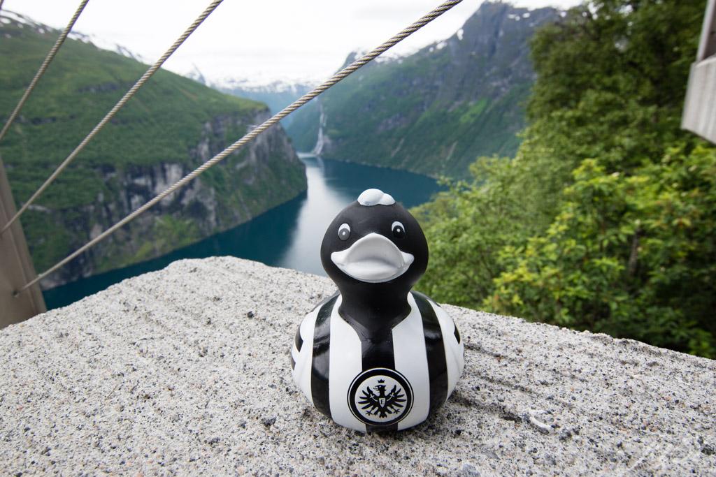 Ente und der Geirangerfjord