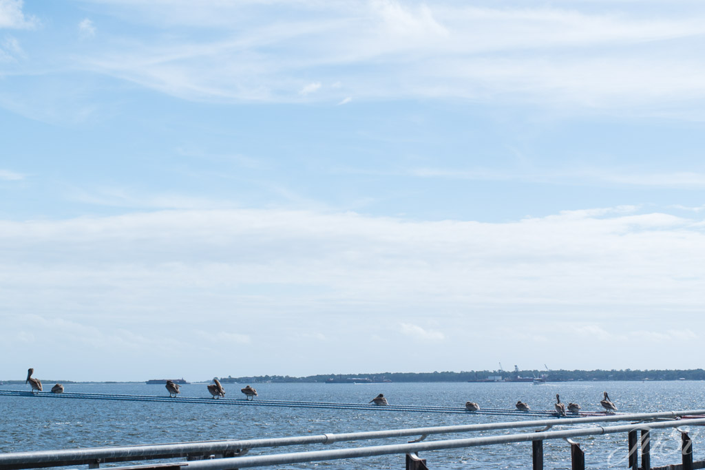 Pelikane auf den Tauen