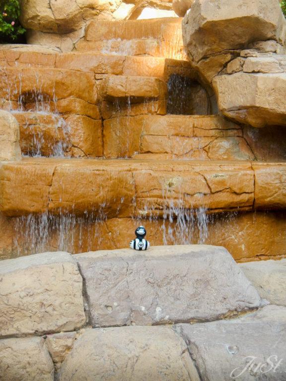 Ente im Aquapark Dubai