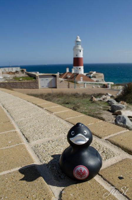 Bild Ente in Gibraltar am Leuchtturm Trinity